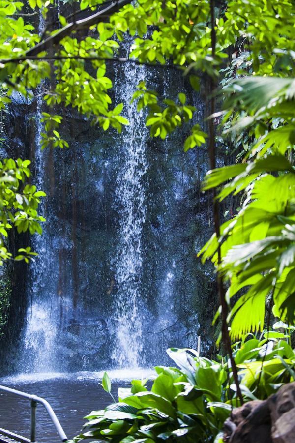 Wasserfall in der Dschungelhalle in Arnheim