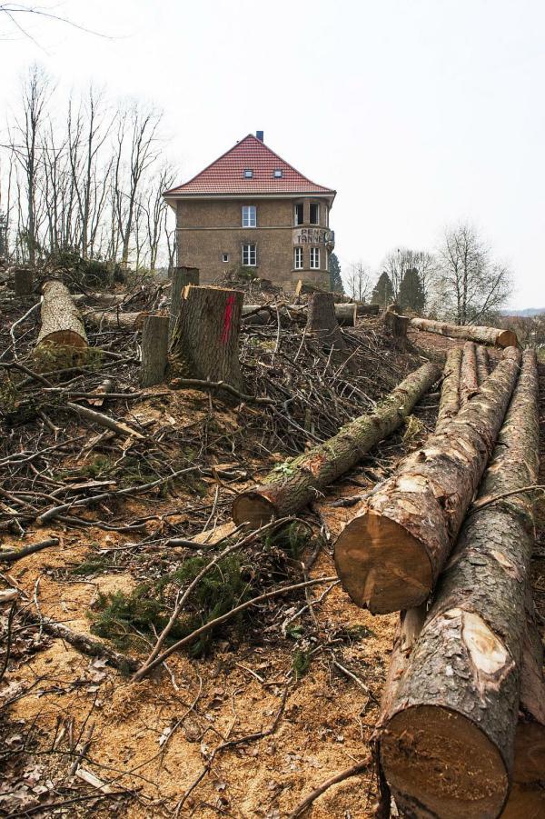 Pension zur Tanne, ohne Bäume
