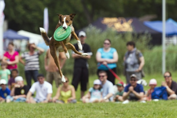 Hund bein Training