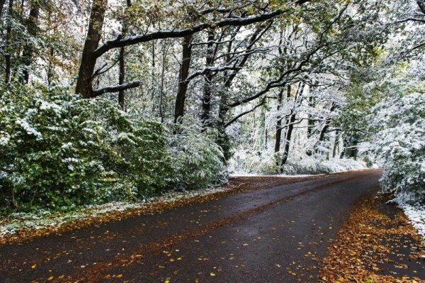 Waldstrasse nach dem Schneefall