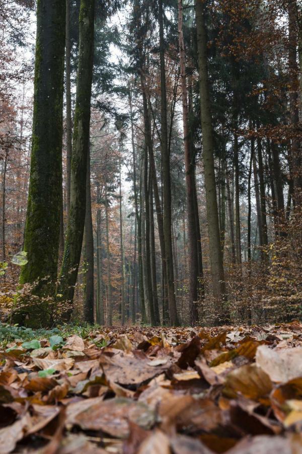 Herbsttag im Wald