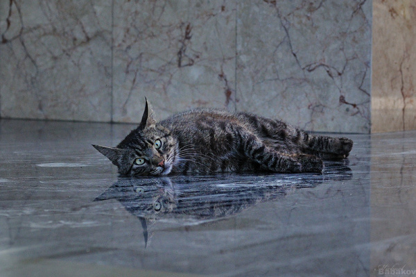 Cat and its reflection
