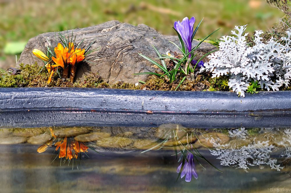 Flowers over water