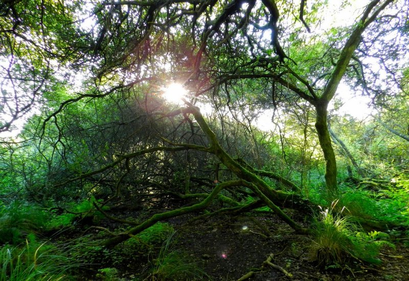 Les mystérieuses et magiques forêts bretonnes