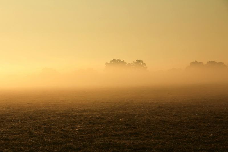Brouillard matinal dans la campagne