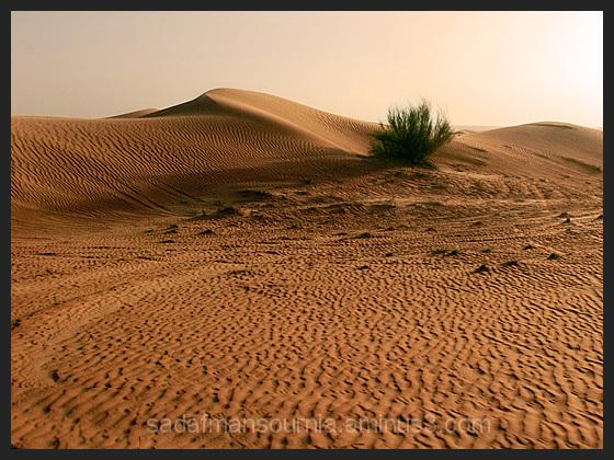 Sahara - Dubai