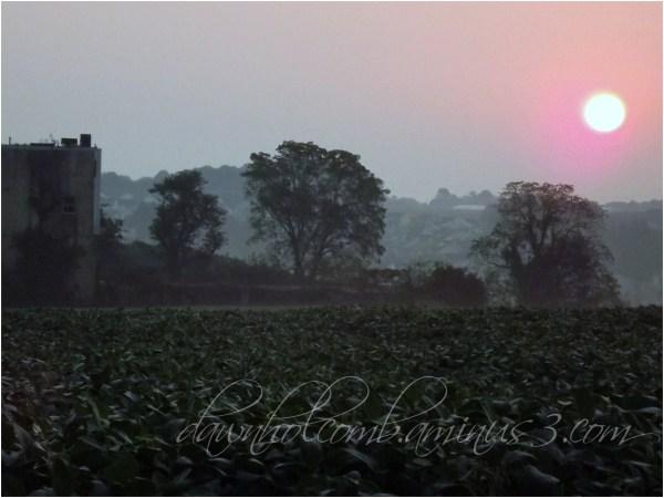 Sunrise arcoss the feild