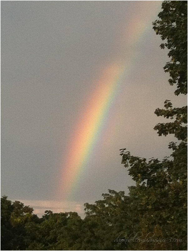 A Rain Bow Of All Colors