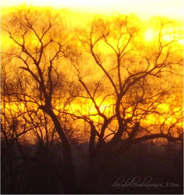 Sunries great start to 2013
