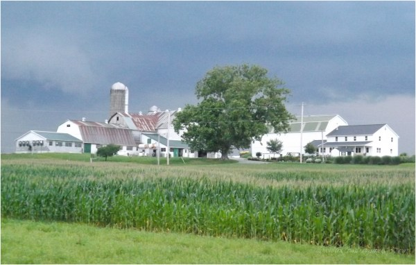 lasting farm