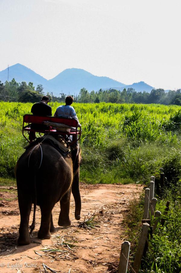 Thailand:  Elephant Ride 2