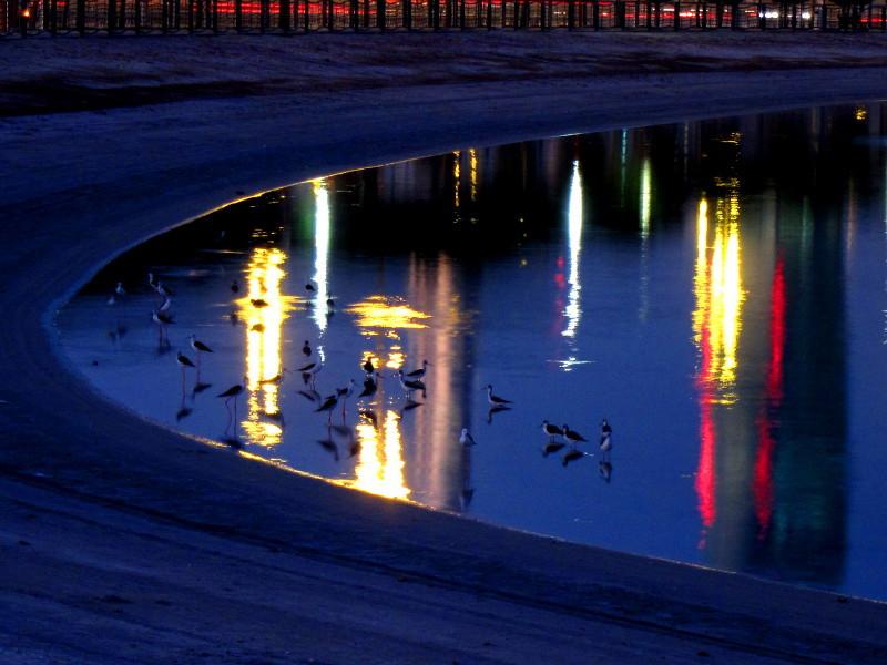 Birds in Al Quoz Park, Dubai