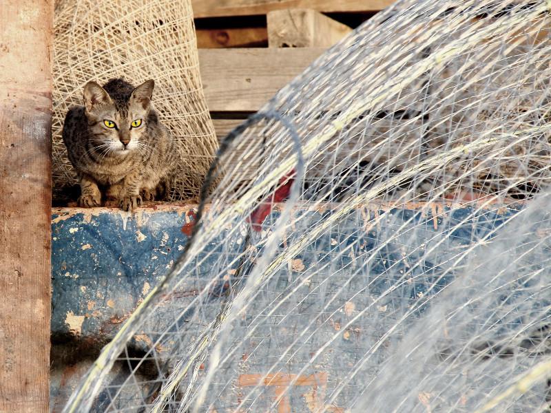 Cat, Umm al Quwain