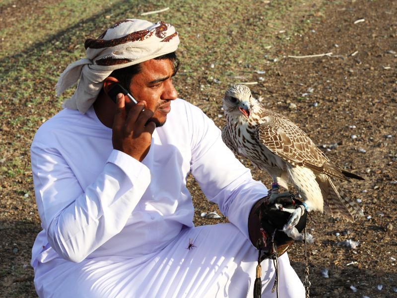 Falcon and falconer, Ekhaidir, Sharjah