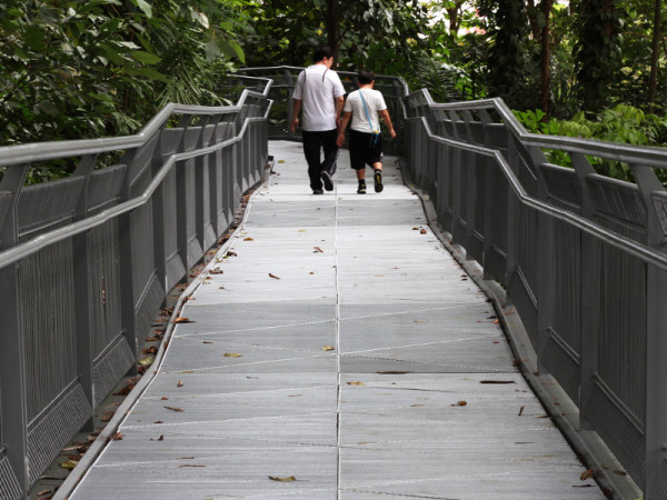 Forest Walk, Singapore