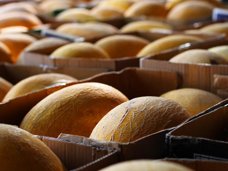 Fruit and Vegetable Market, Dubai