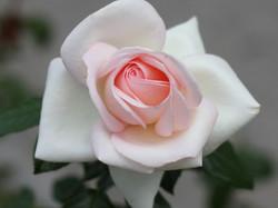 Rose Garden, Bern, Switzerland