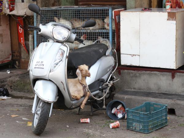 Mahim, Mumbai, India