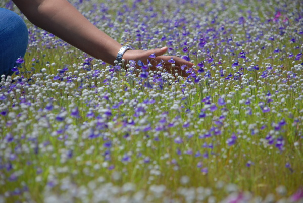 Valley of flowers - so much beauty