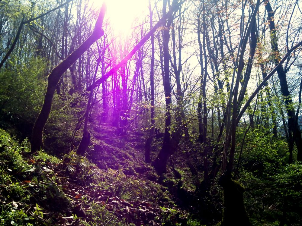 Violet sunlight