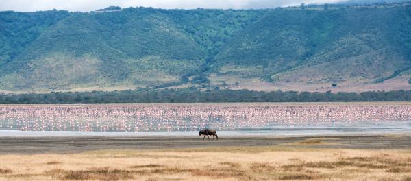 Greeting the flamingos