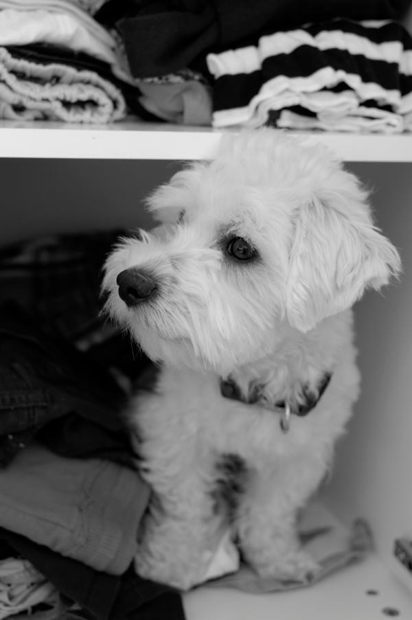 Dog in a wardrobe