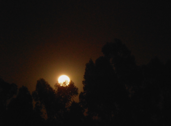 Once again the Moon