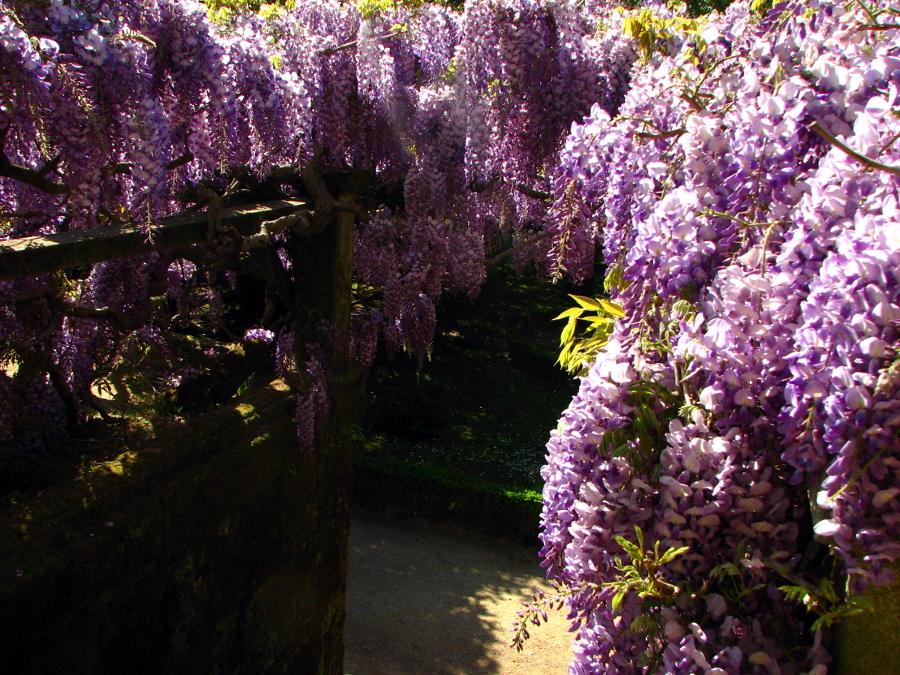 spring in all its splendor
