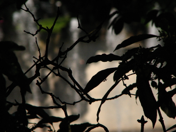 Through the leaves and shadow