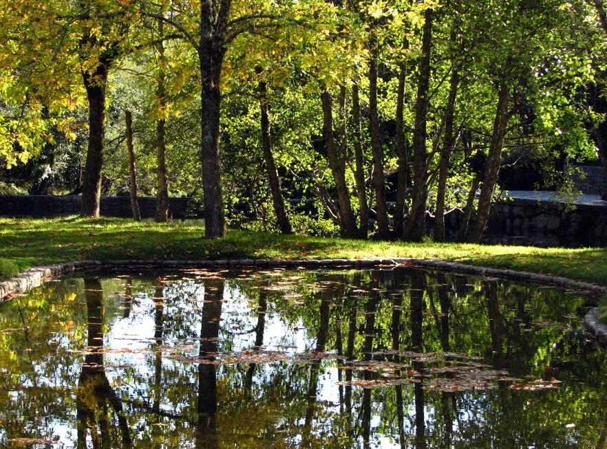 reflection autumn