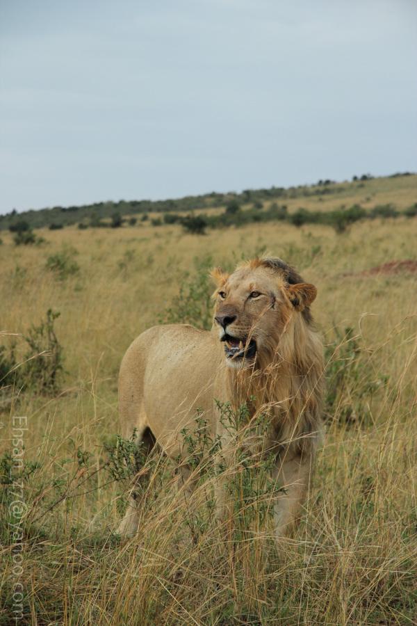 Kenya - Masaimara