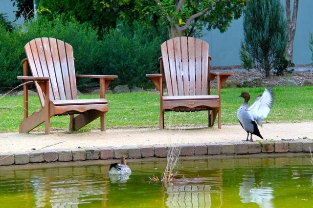 bird relationship