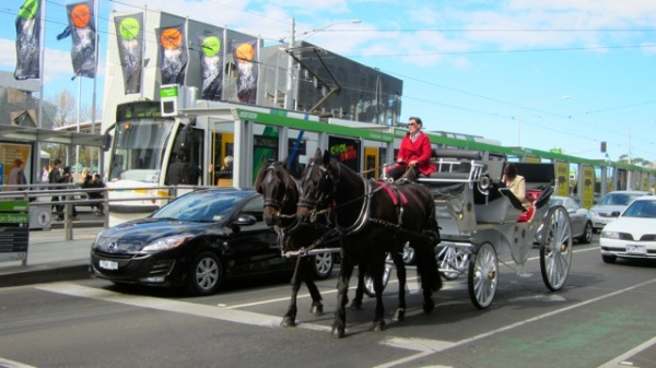 horses on the street