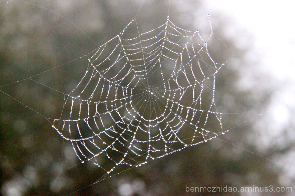 nothingness of the web