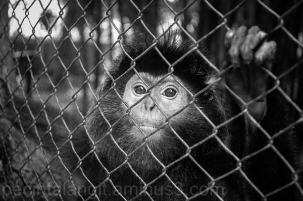 What do you feel, monkey?
