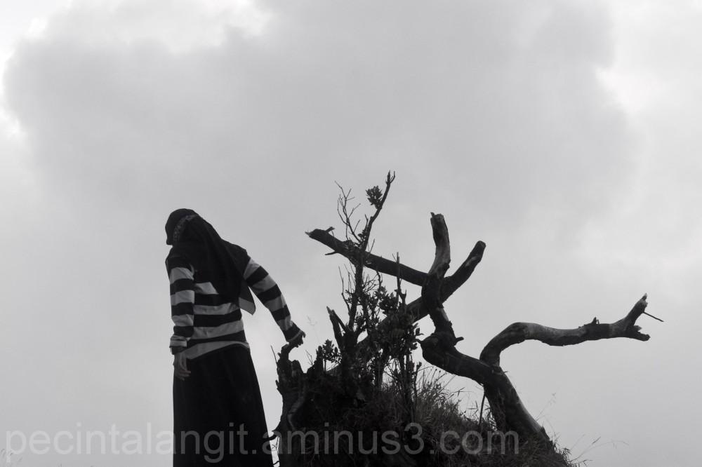 the sky, the tree, the human