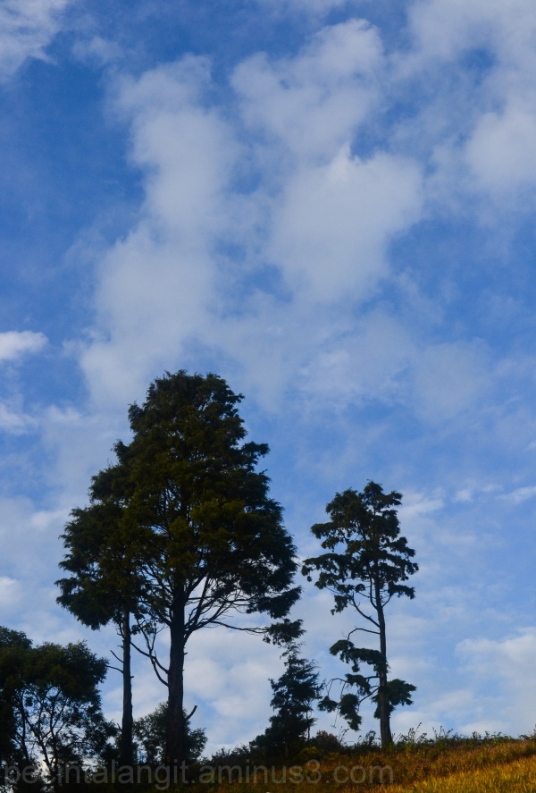 Bluesky and the trees.