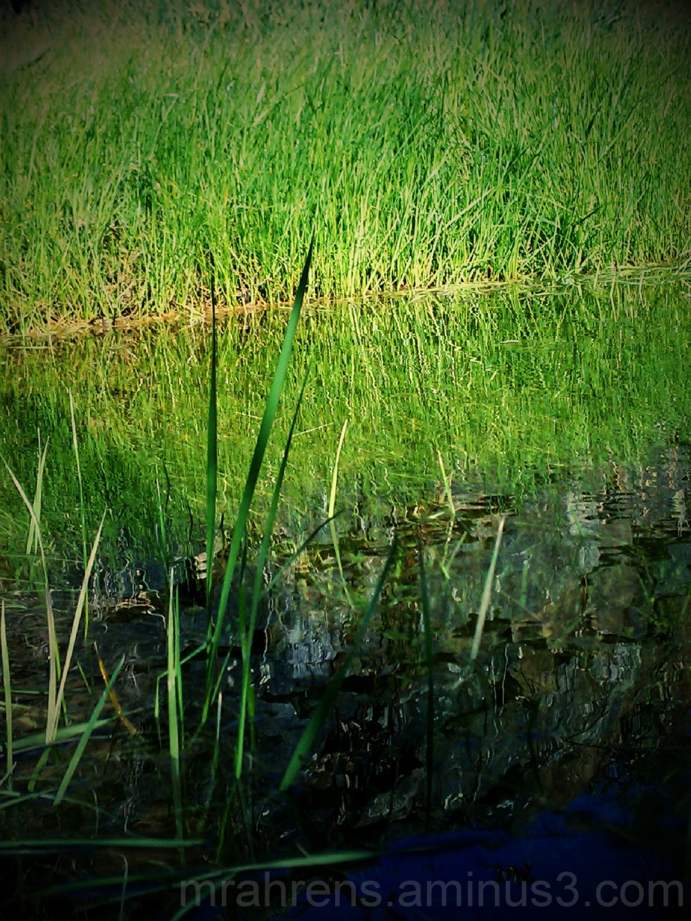 Grass on Glass