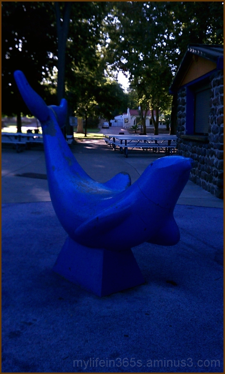 Royer Park Dolphin