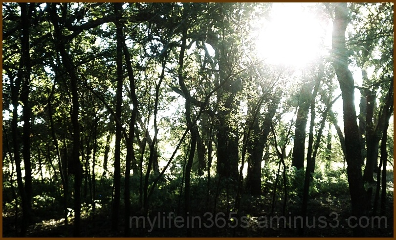 Afternoon Forest