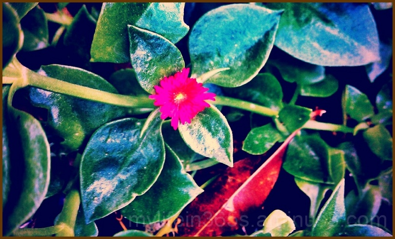 Little Pink Flower