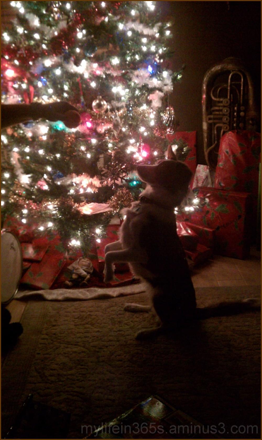 Christmas Please?