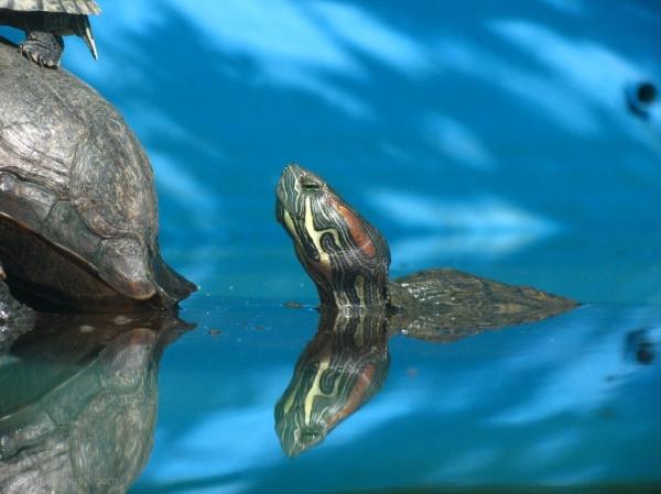 Turtle pond Nehru Zoological Park Hyderabad