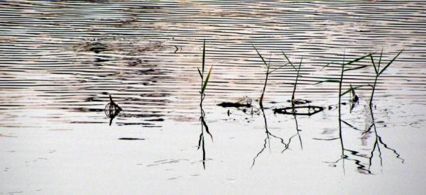 Lotus Pond Hyderabad