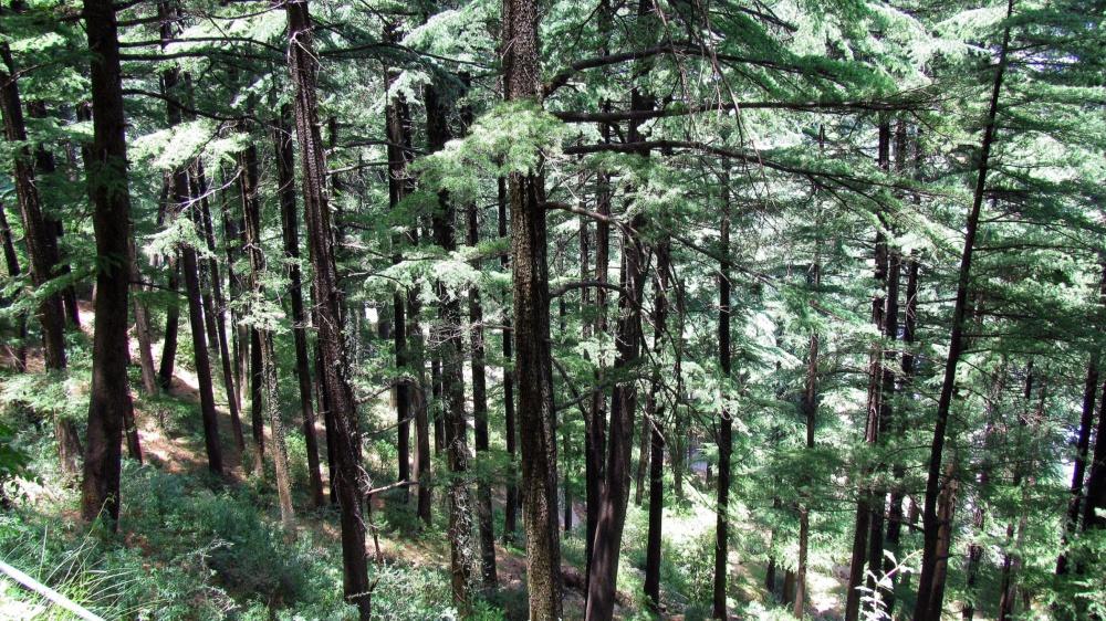 Dharamshala Himachal-Pradesh