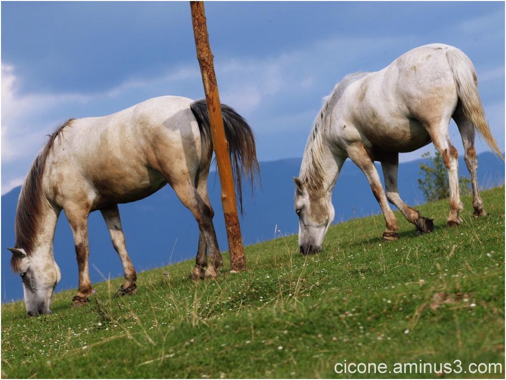 White Twins - 1