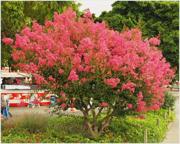 A tree with flowers