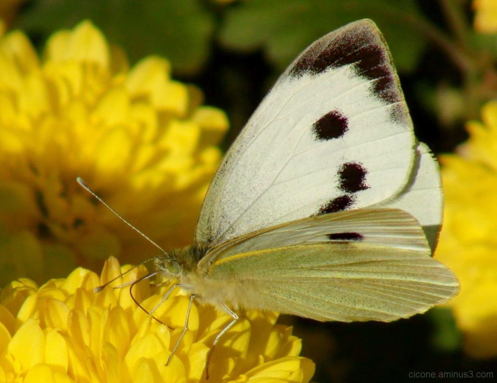 A guest in my garden