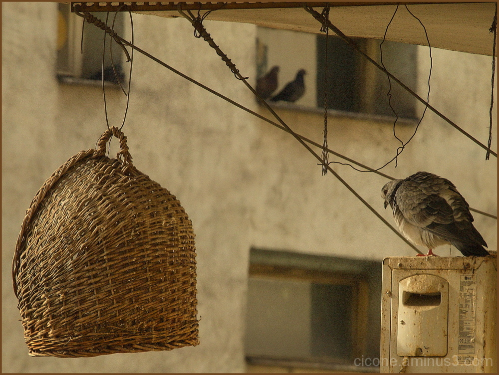 A place for doves/1