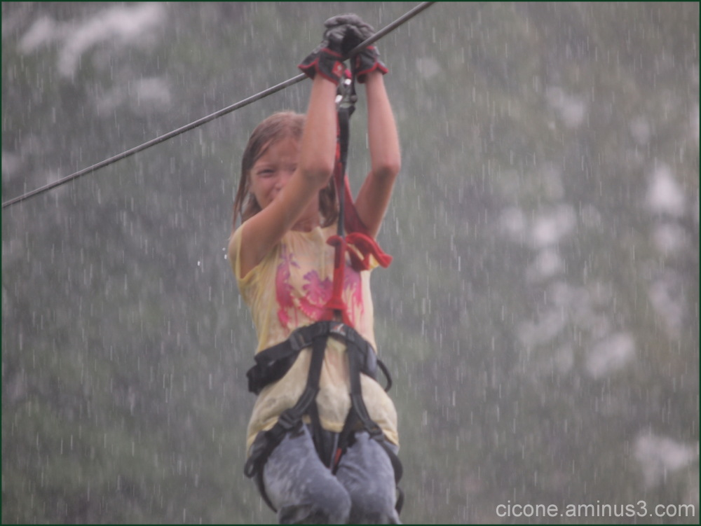 The flying fox in the rain